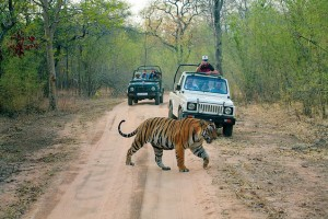 Ranthambore Tourist Safari