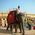 Elephant Riding in Amber Fort